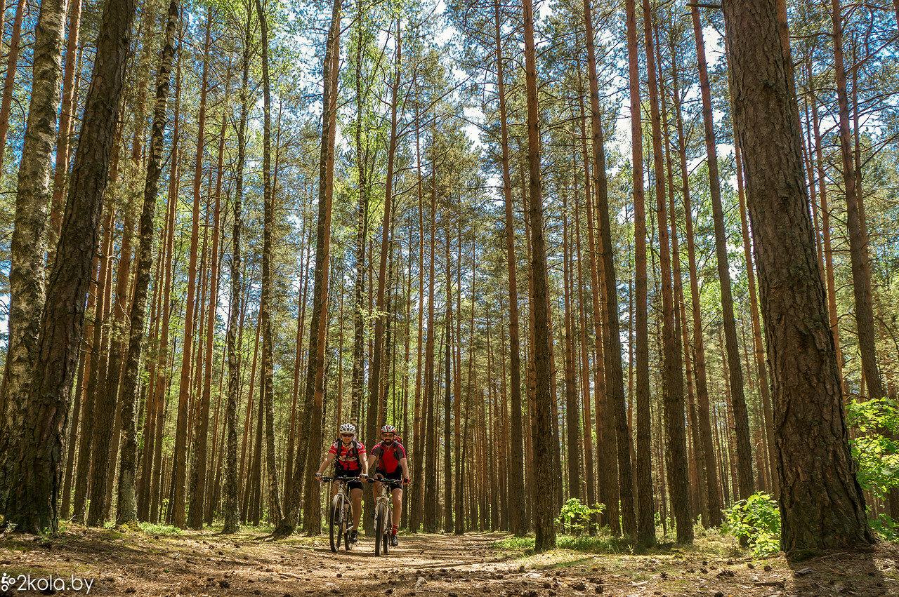 Лес около Березовки